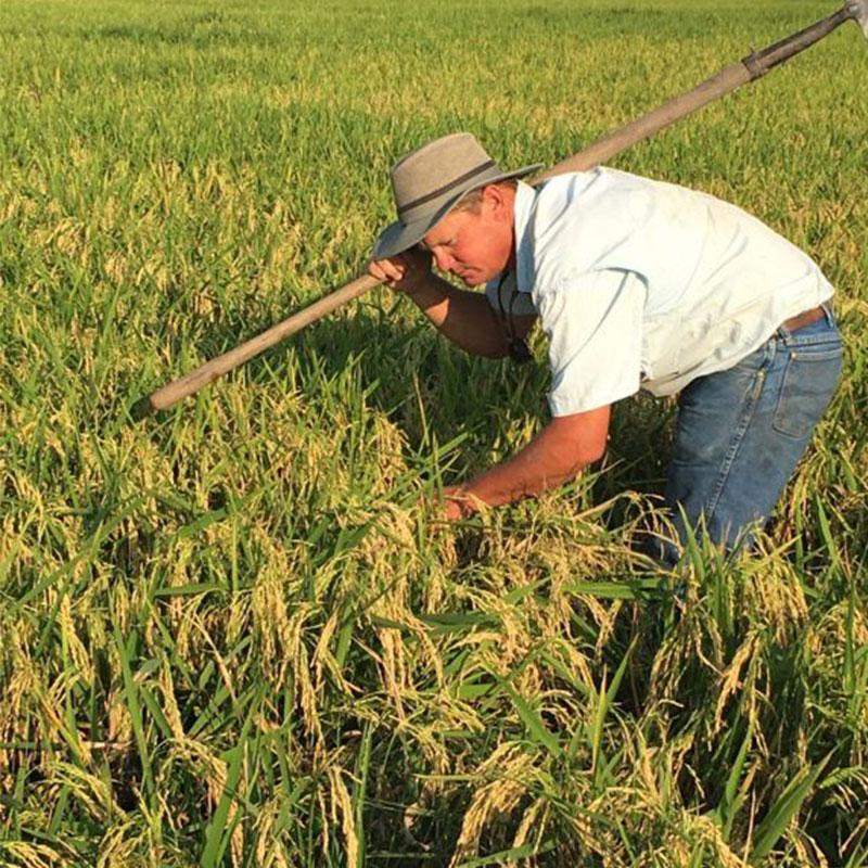 Paul Johnson in a rice field.