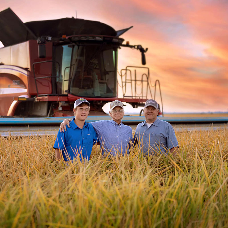 Rice farmer, Rance Daniels, standing in a rice field with his father and son.