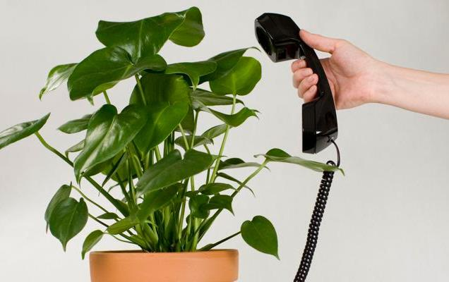 Hand holds black phone receiver held up next to green plant in pot