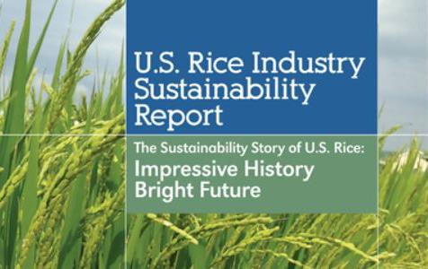 Cover of Rice Sustainability Report with photo of green rice behind blue and green text boxes
