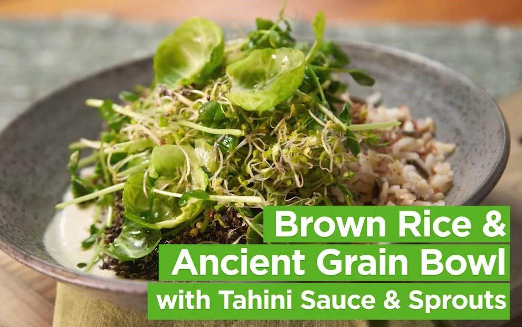 Food photo of brown rice and ancient grain bowl with tahini sauce and sprouts
