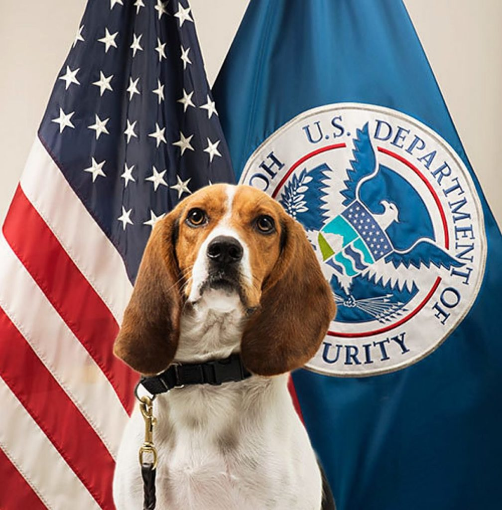 Hound dog with white chest and droopy brown ears in front of flags of US and US Dept of Homeland Security