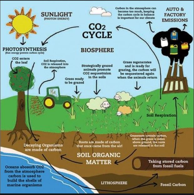 Carbon Cycle drawing
