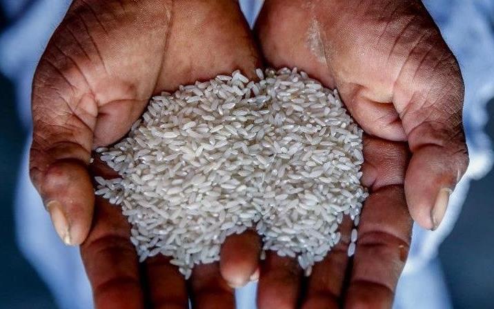Dark-skinned hands hold raw, white rice