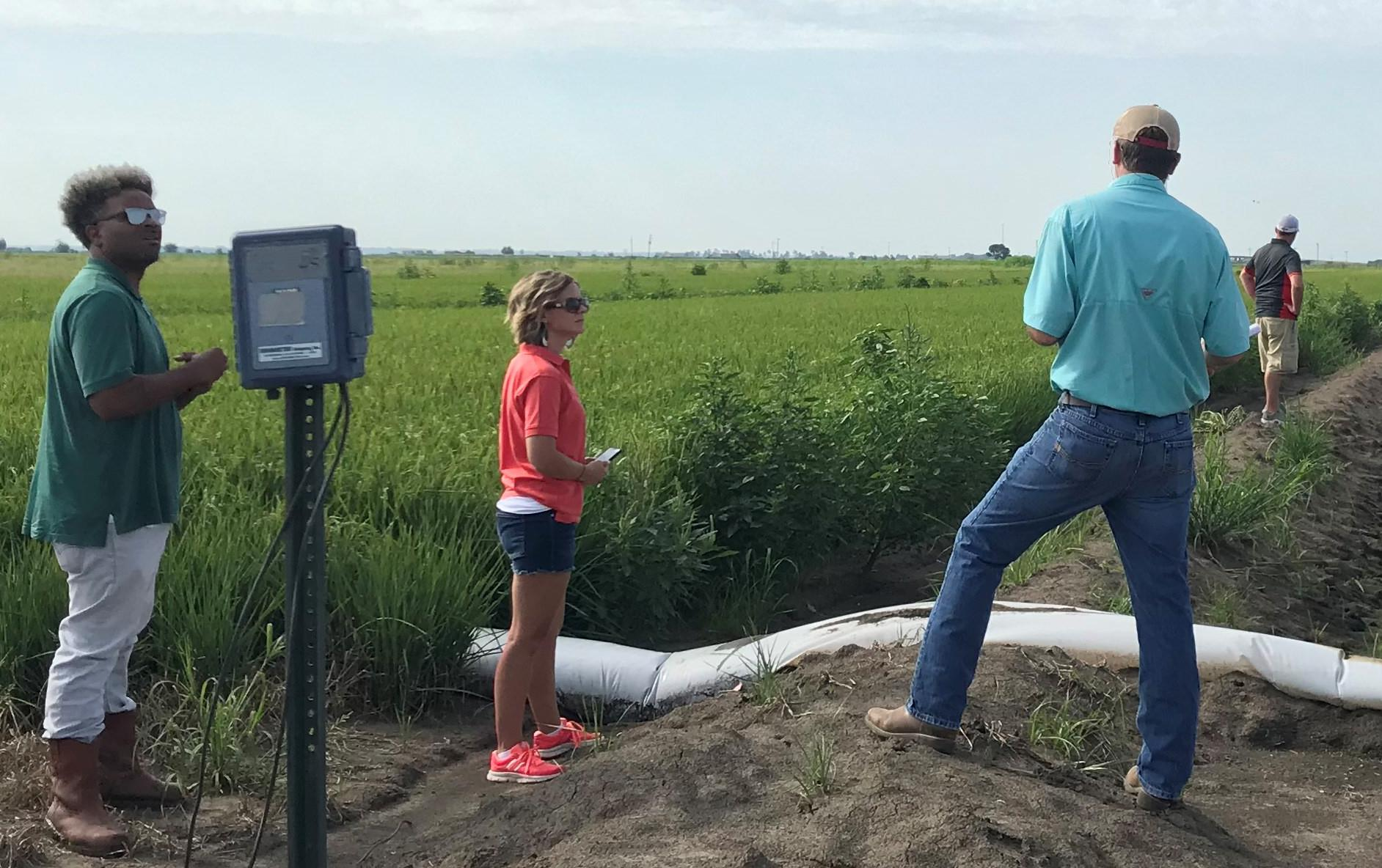 Several people inspect polypipe irrigation in green rice field
