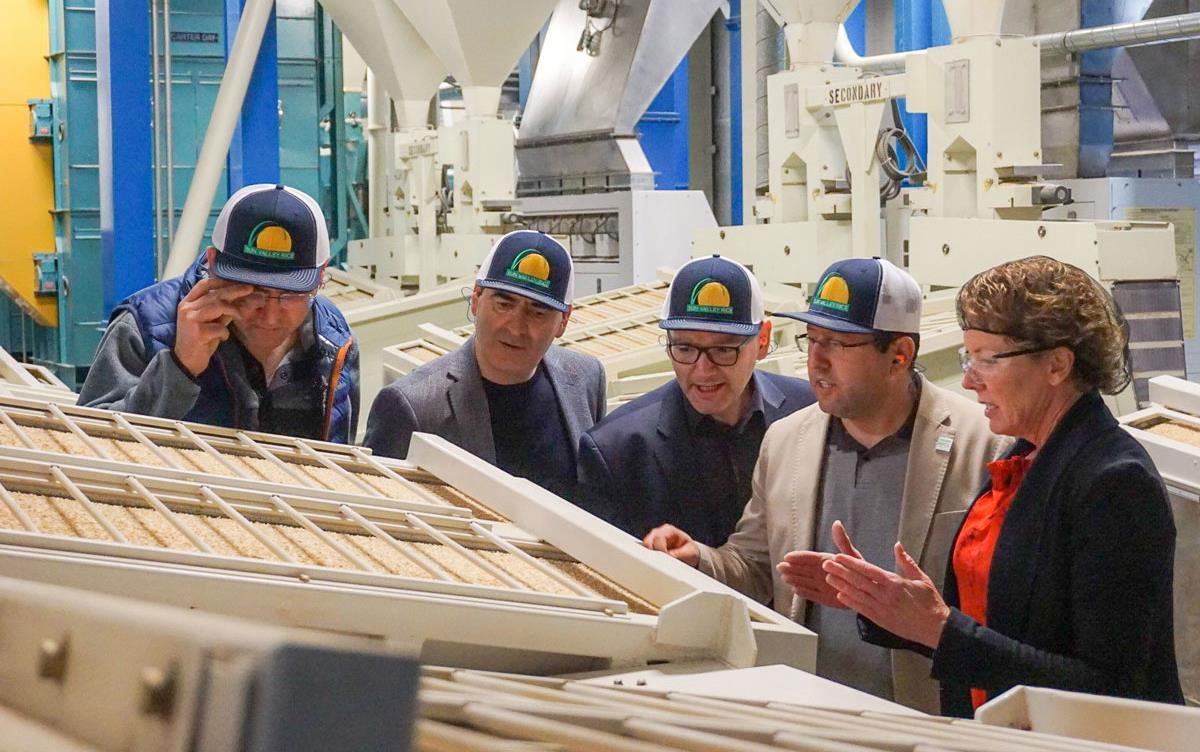 Four men wearing ballcaps & one woman wearing hairnet stand in front of rice sorter inside rice mill, more milling equipment in background