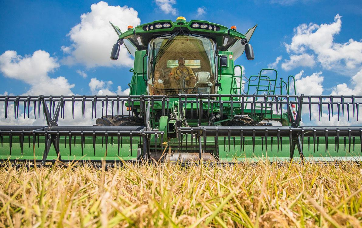 Close up of green combine harvesting in golden rice field, blue sky with white puffy clouds