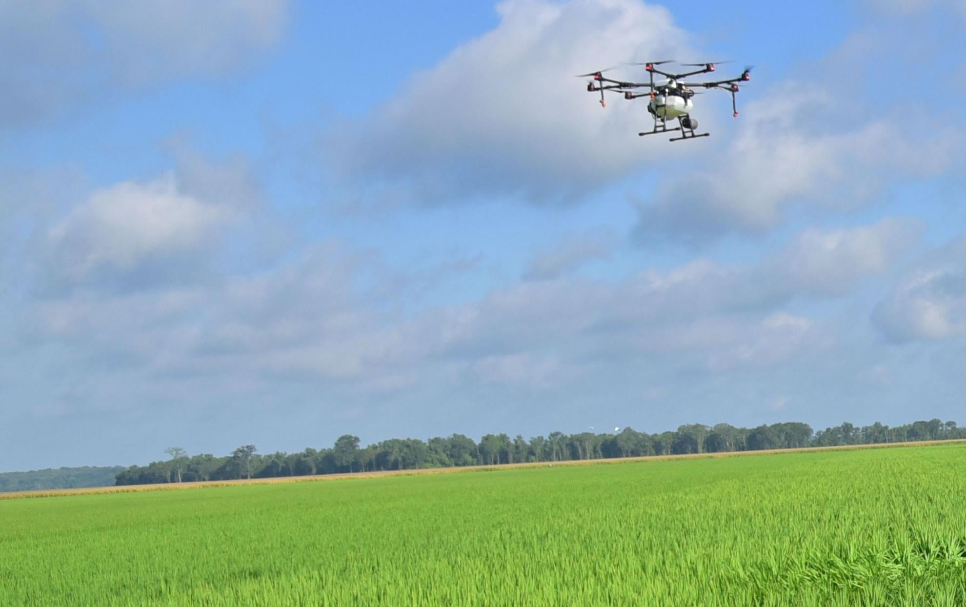 Group of people gathered at edge of bright green rice field watches drone demonstration
