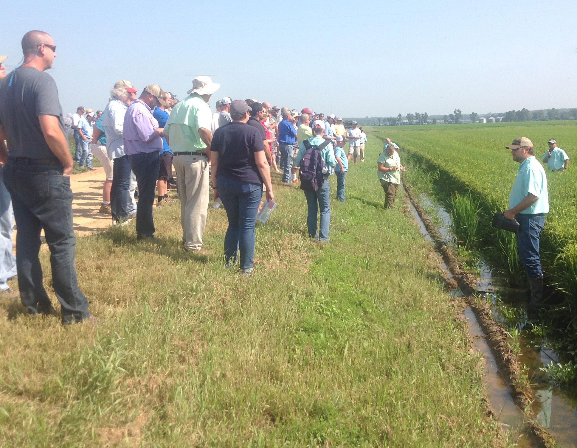 AR-Horizon-Ag-Field-Day, large group stands in rice field listening to researcher