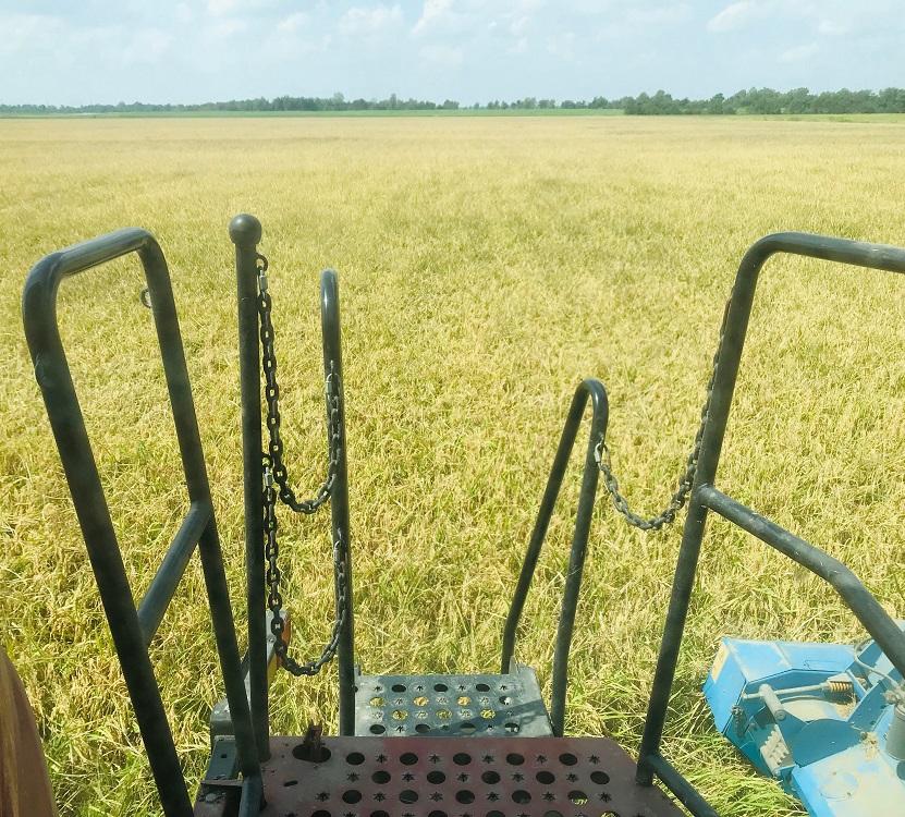 crop report 2