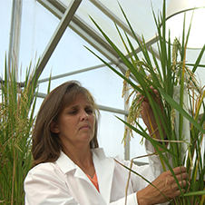 Image of a rice researcher