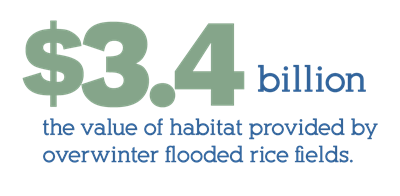 the value of habitat provided by overwinter flood rice fields exceeds 3.4 billion dollars