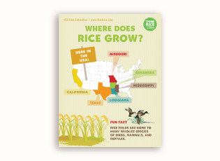 Thumbnail image of the Where Does Rice Grow Poster