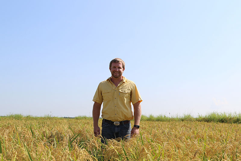 Rice farmer, Scott Savage, standing in a rice field.