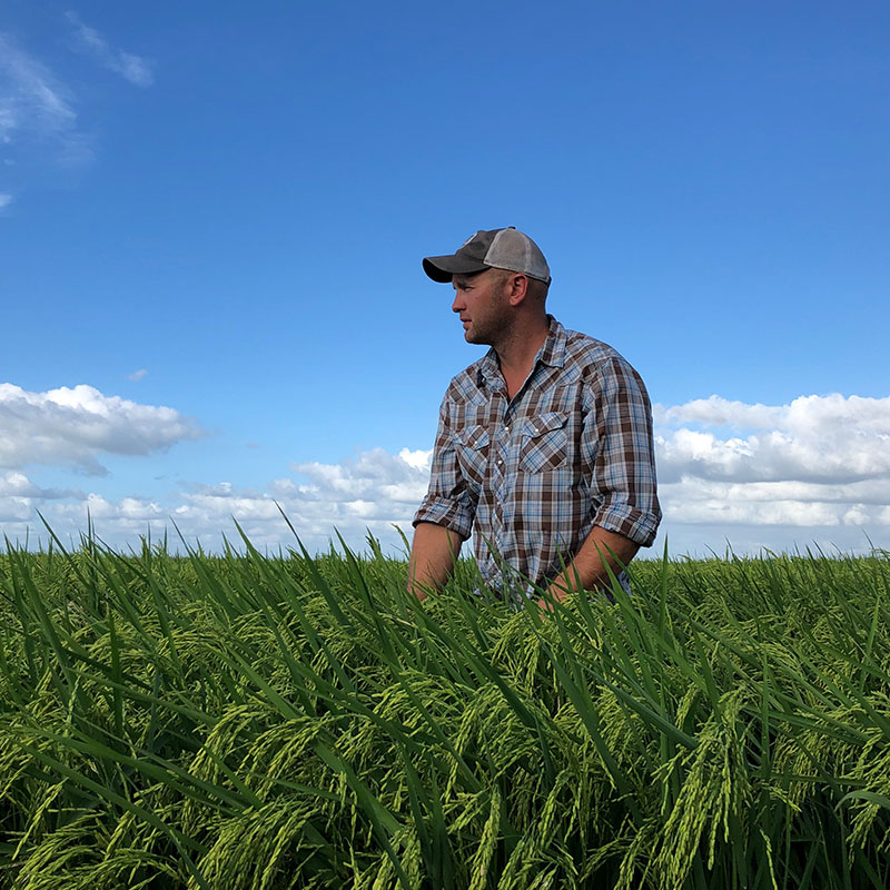 Timothy Gertson in a rice field with blue sky.