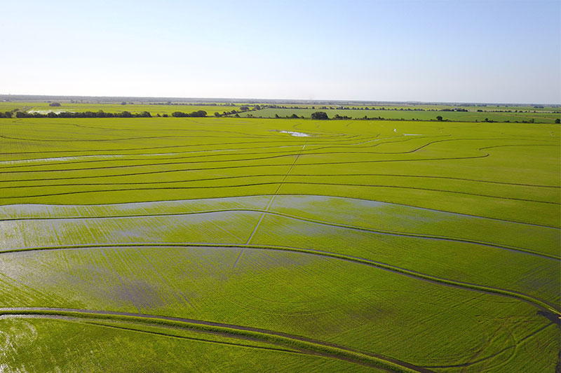 Aerial view of a Texas rice field.