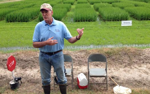 White man standing in front of green rice research plots
