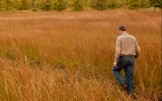 Man with back to camera walking through mature rice field