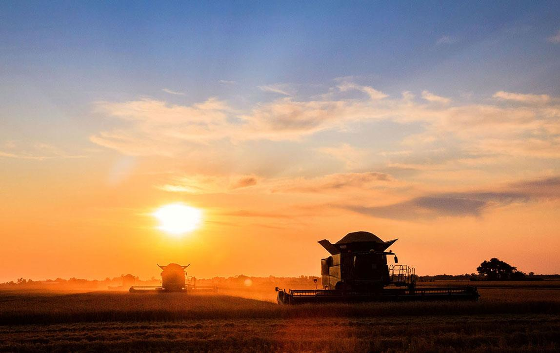 Sunset over rice harvest with combines in silhouette