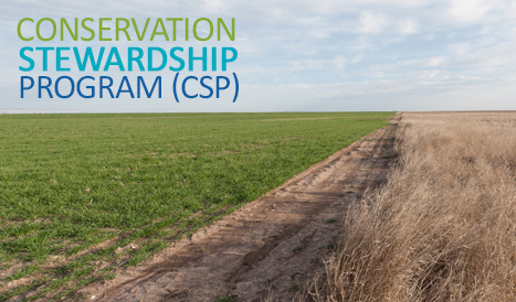 "Text ""Conservation Stewardship Program"" superimposed over photo of green grass field next to dirt road next to field of brown stalks"