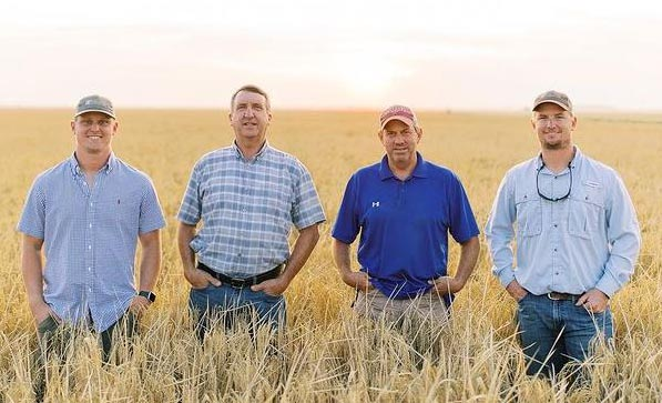 Four white men wearing blue shirts standing in golden rice field
