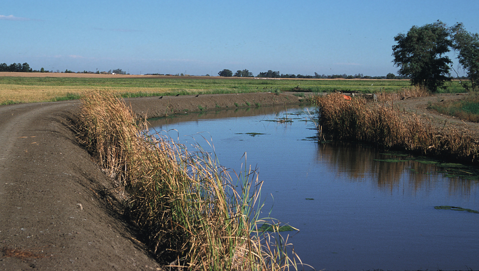 Water in recovery ditch near rice field with vegetation lining the sides