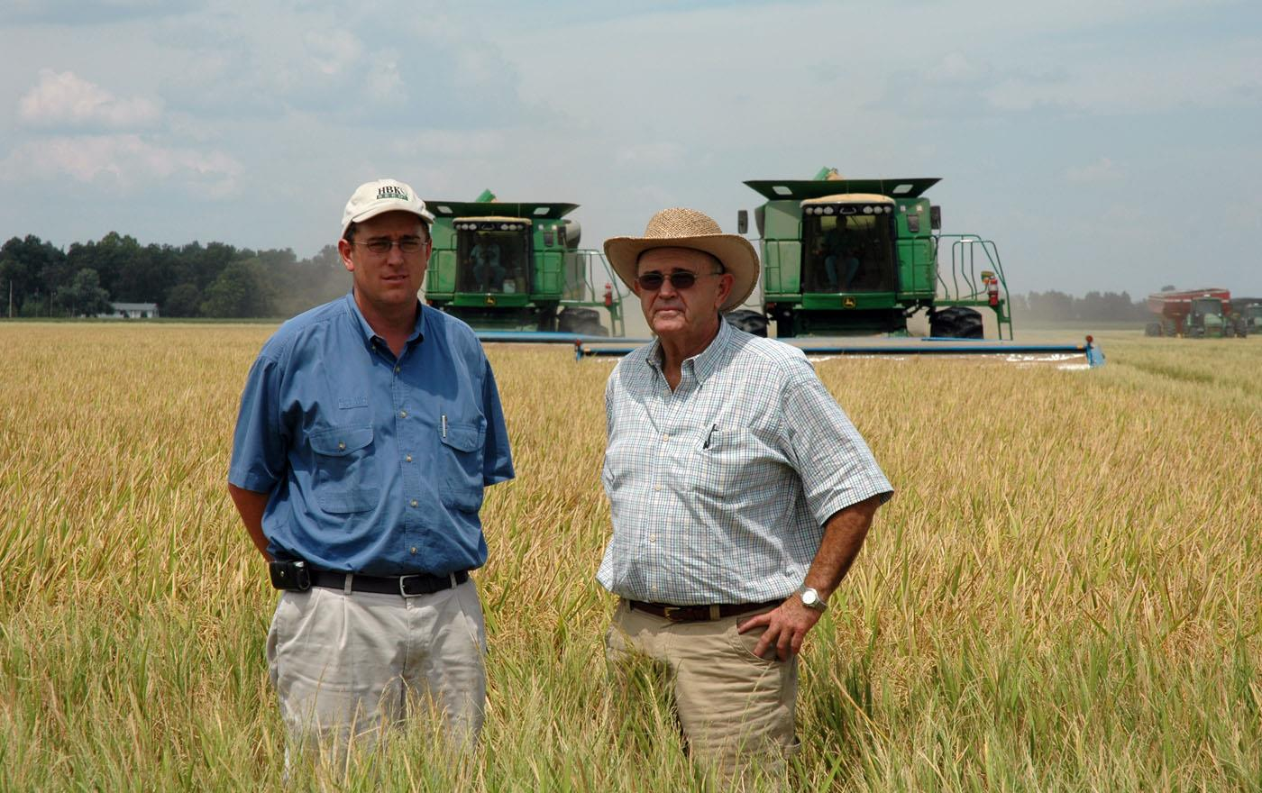 Two white men standing in mature rice field, two green combines in background
