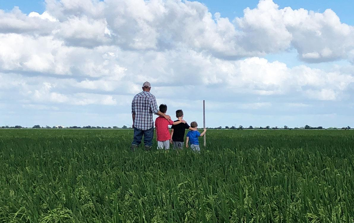 Gertson-family, father and three sons stand in rice field with backs to the camera