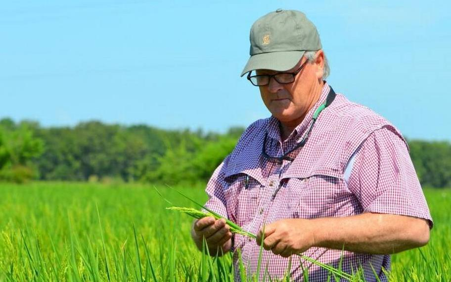 Man wearing ball cap and glasses stands in vibrant green rice field, holding one tiller in his hands