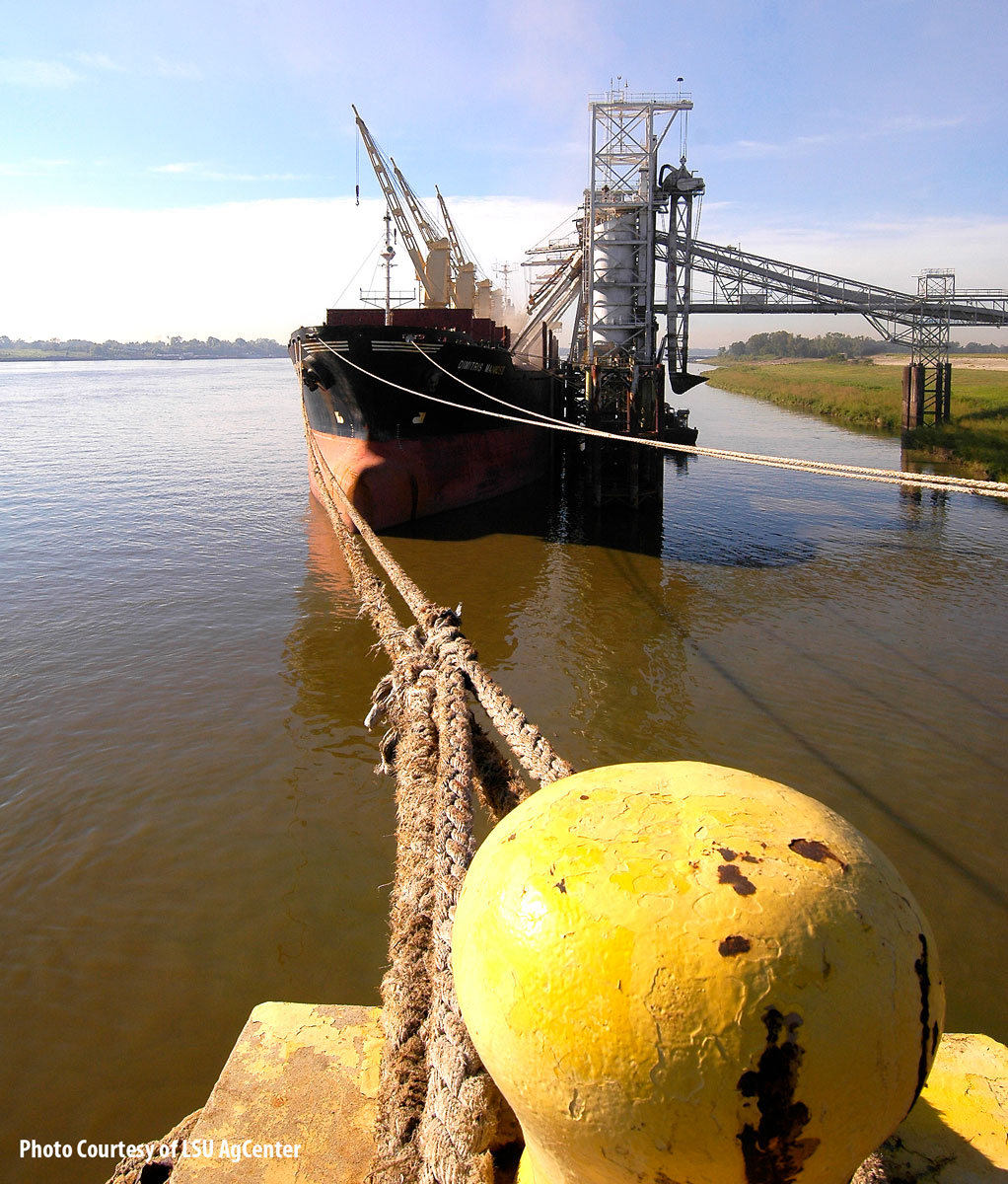 Rice being loaded onto ship, large yellow concrete piling with ropes tied to it