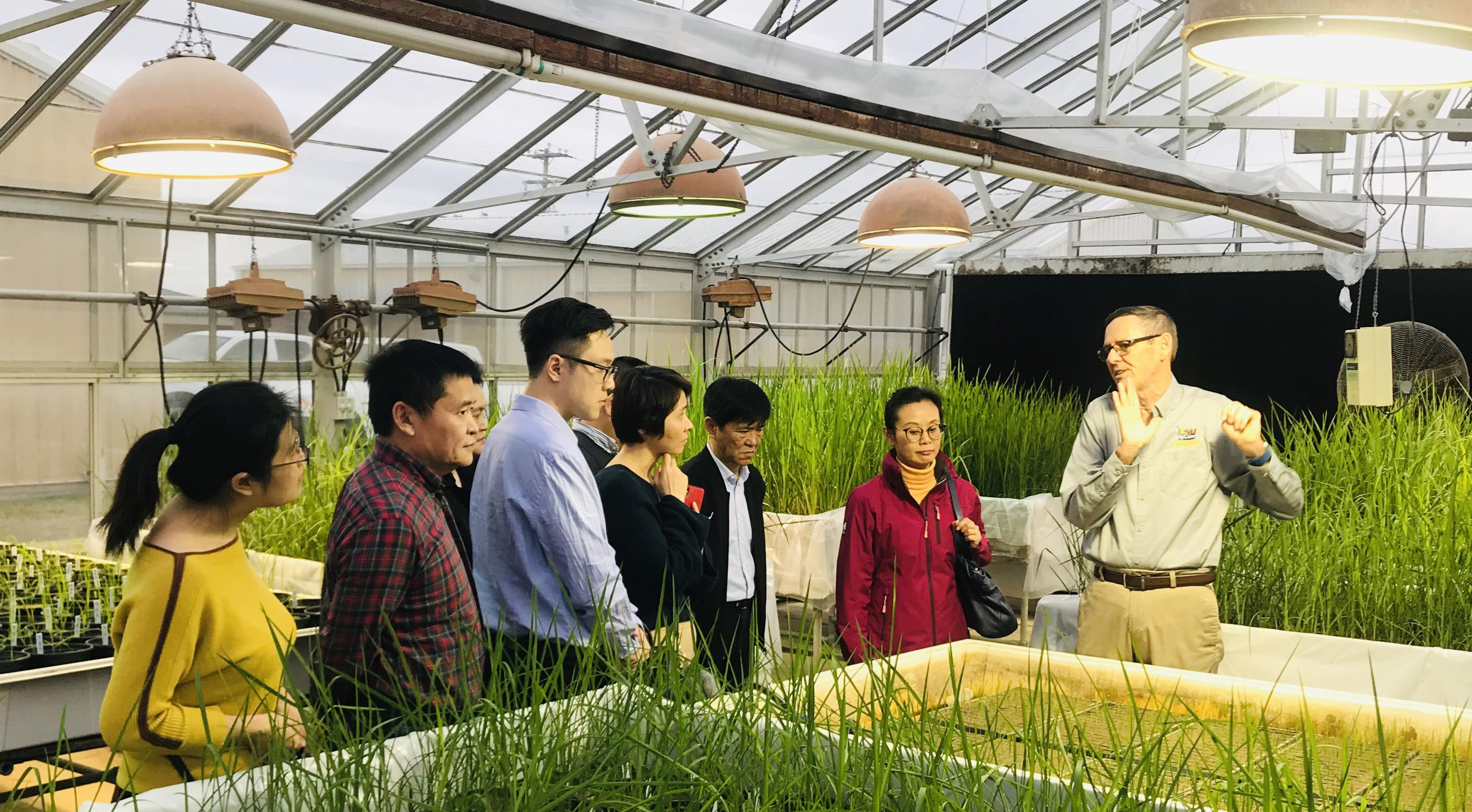 Group of people standing among rice research plots in greenhouse