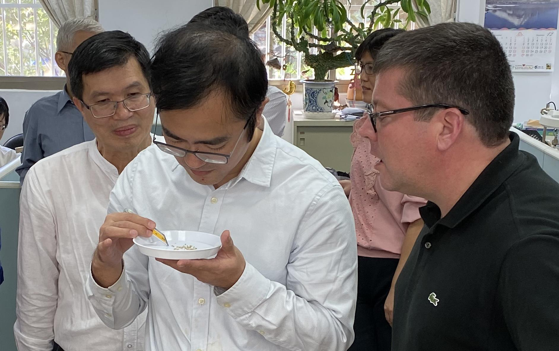 Asian men and one white man stand in front of table with rice samples and calculators, looking at rice grains in small white plate