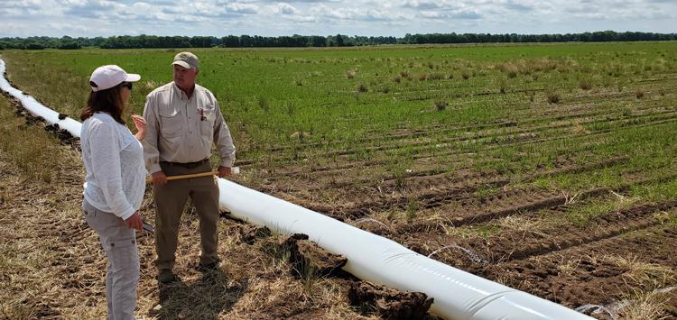 Joe Mencer explains row rice techniques to Betsy Ward