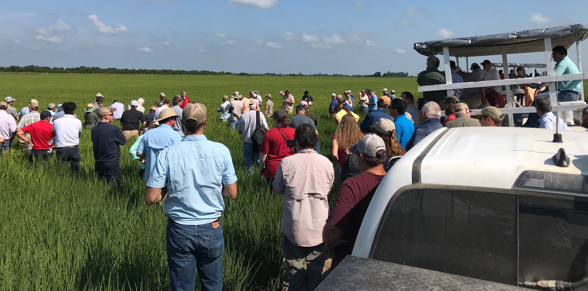 Lots of people gathered in a rice field next to trucks pulling trailers with more people on board