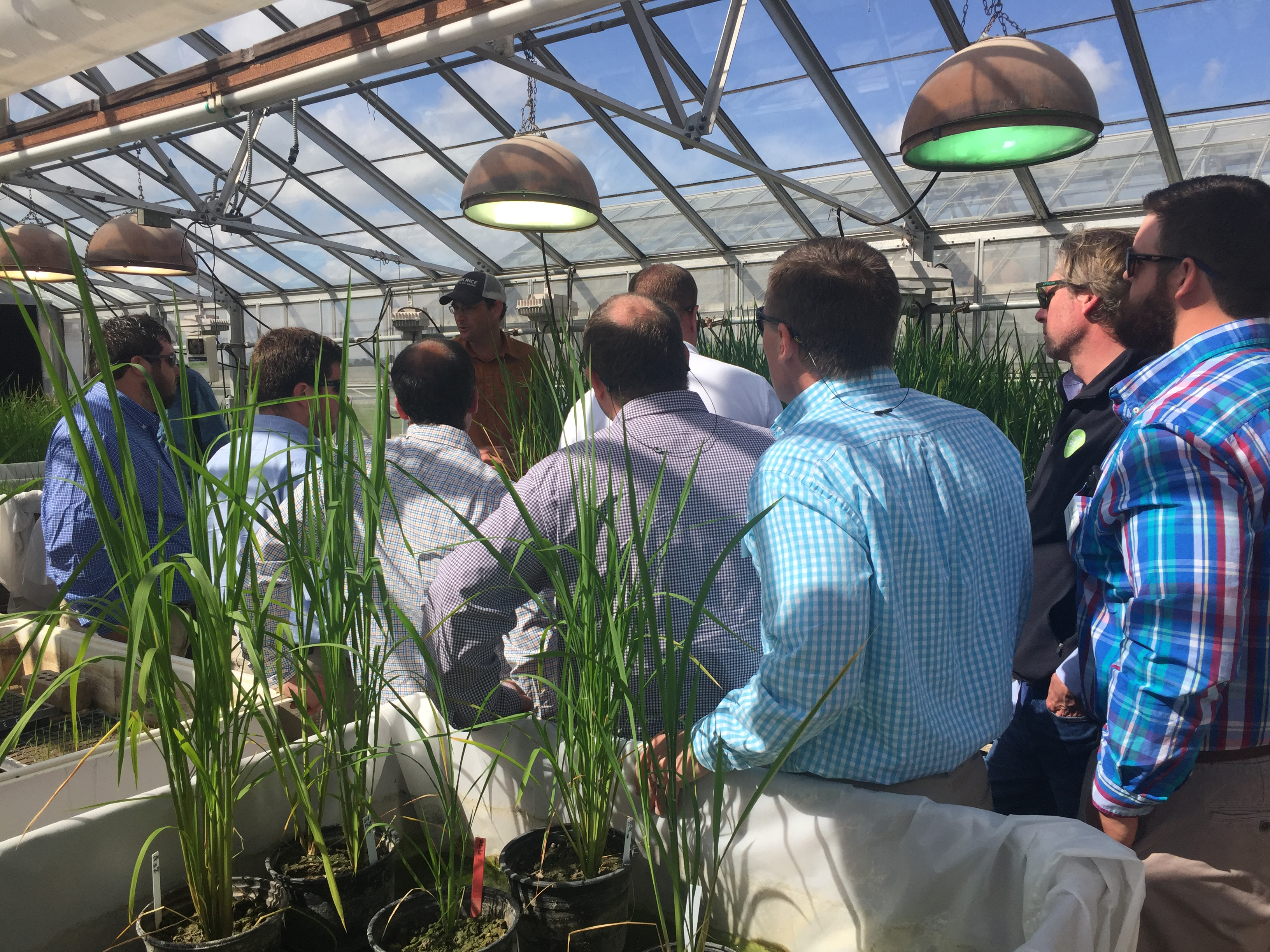 Group of men, backs turned to camera, gather around another man, all standing in a greenhouse with rice plants in individual pots