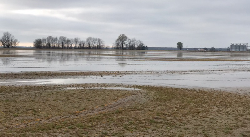 Standing water on muddy field, gray skies with line of trees and grain bins in the distance