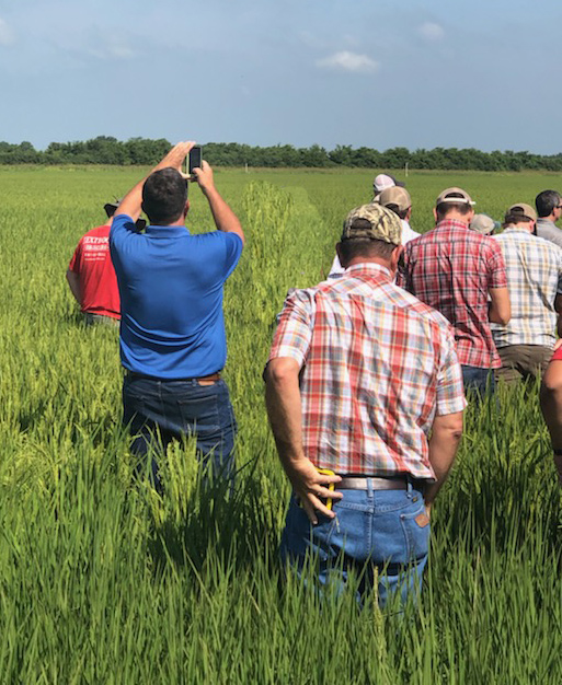 Group of men, most wearing jeans and plaid shirts, stand in rice field with their backs to the camera