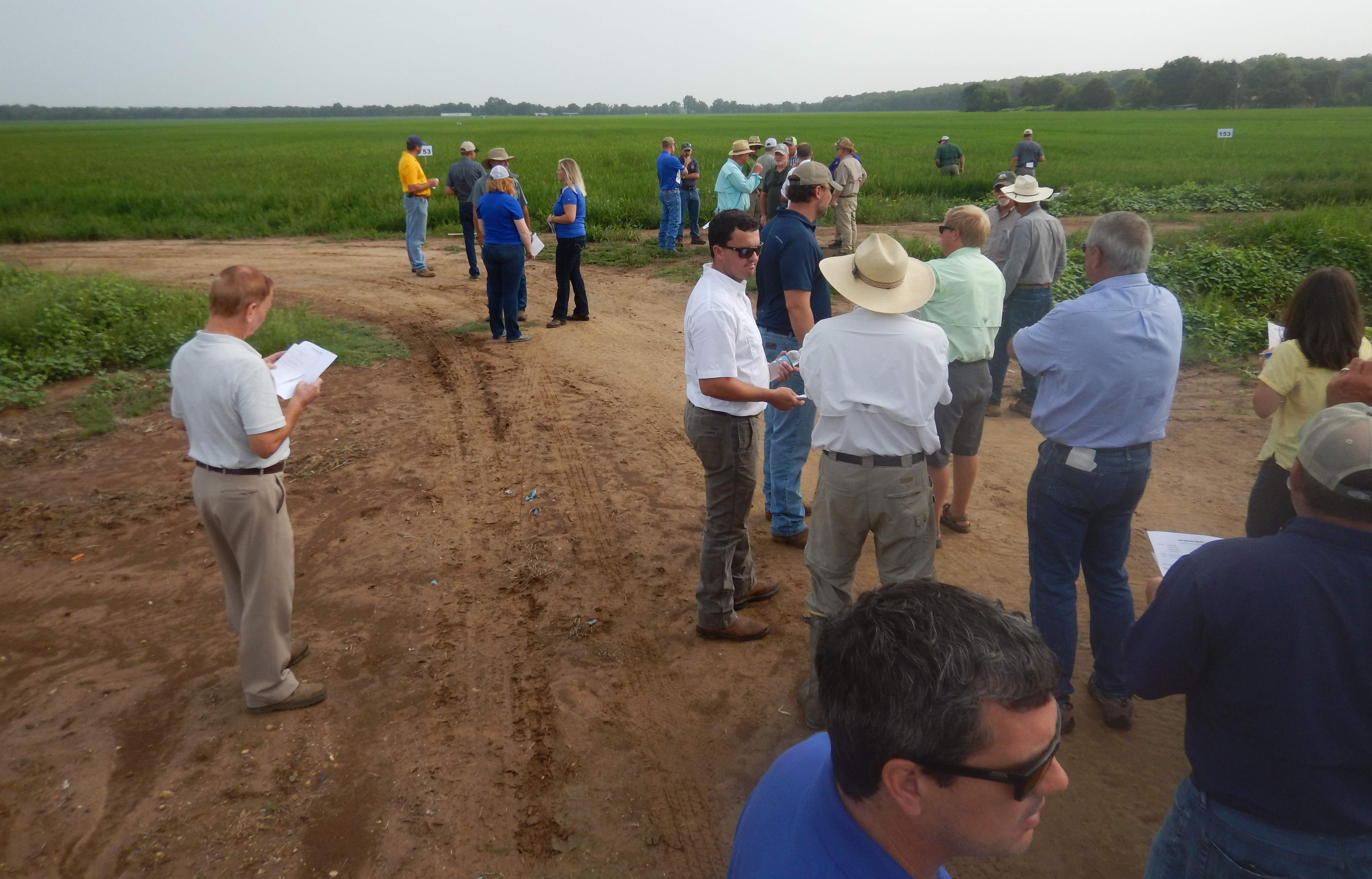 2018 NELA Field Day, lots of people, casually dressed, milling around near a rice field