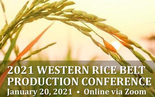2021 Western Rice Belt Conference log shows rice stalk up close against yellow sky background