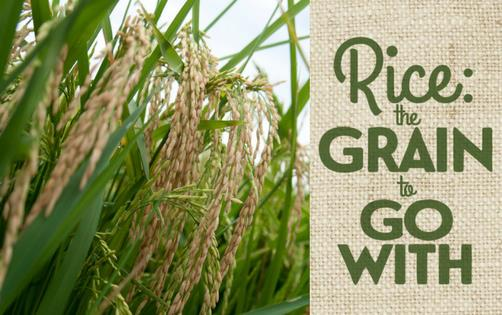 "Photo of golden rice with text ""Rice: The-Grain-to-Go-With"""