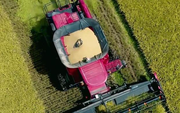 Overhead harvest shot of combine harvesting