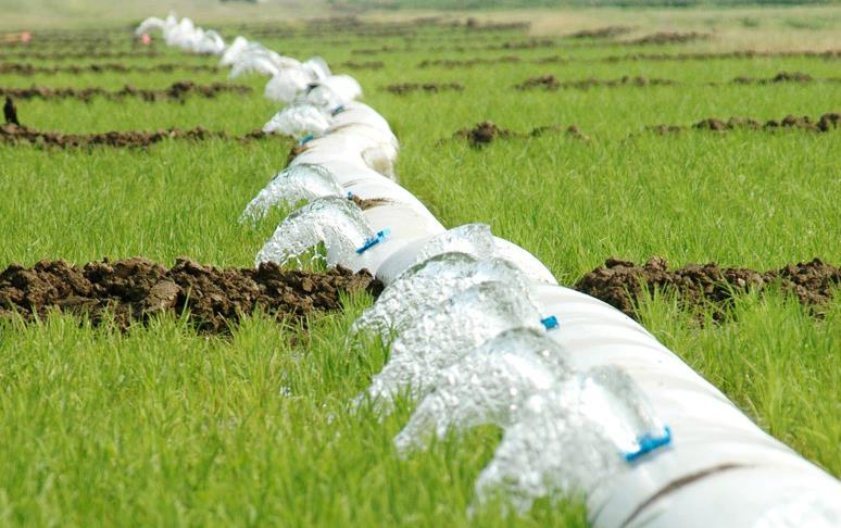 Water flowing through polypipe in green rice field
