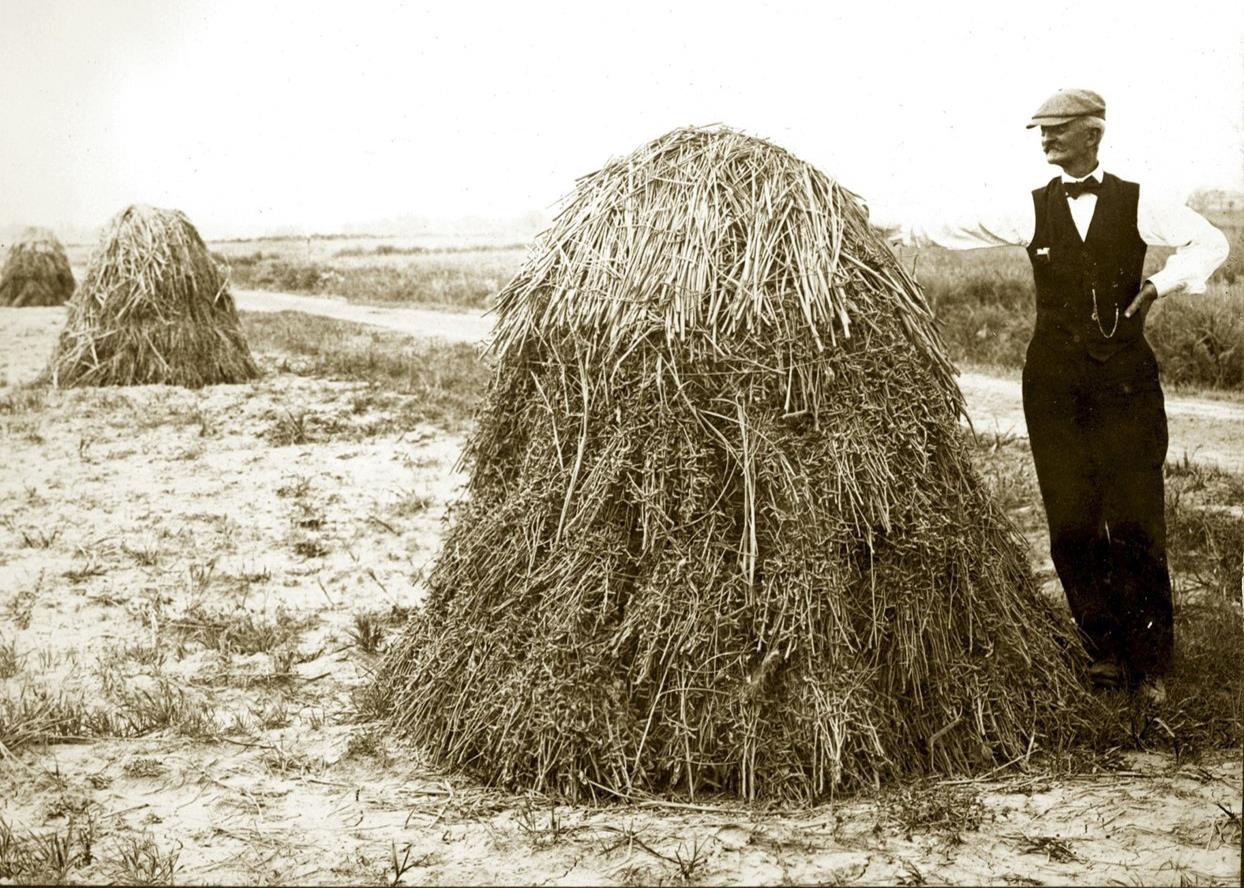 B/W vintage photo of rice stacks in a field, man wearing vest, bowtie, flat cap, and watch fob stands with his arm resting on stack in foreground