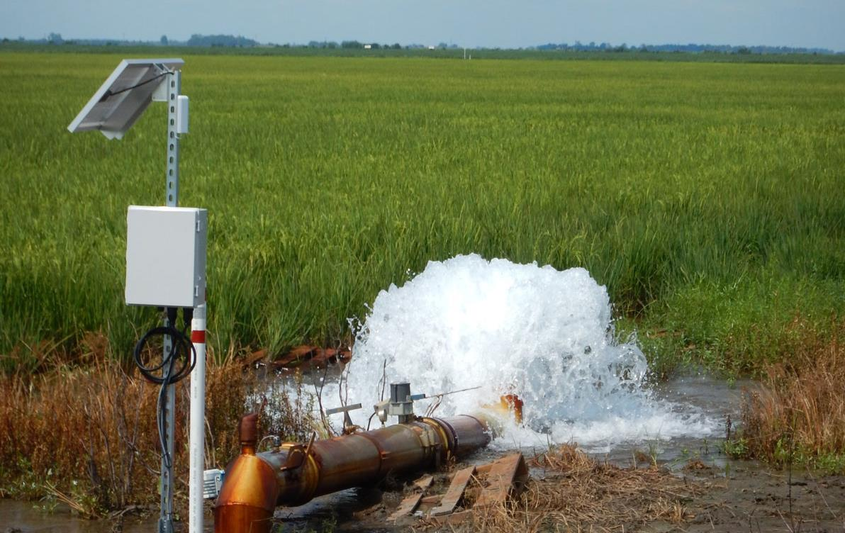 Water flows from pump onto maturing green rice field