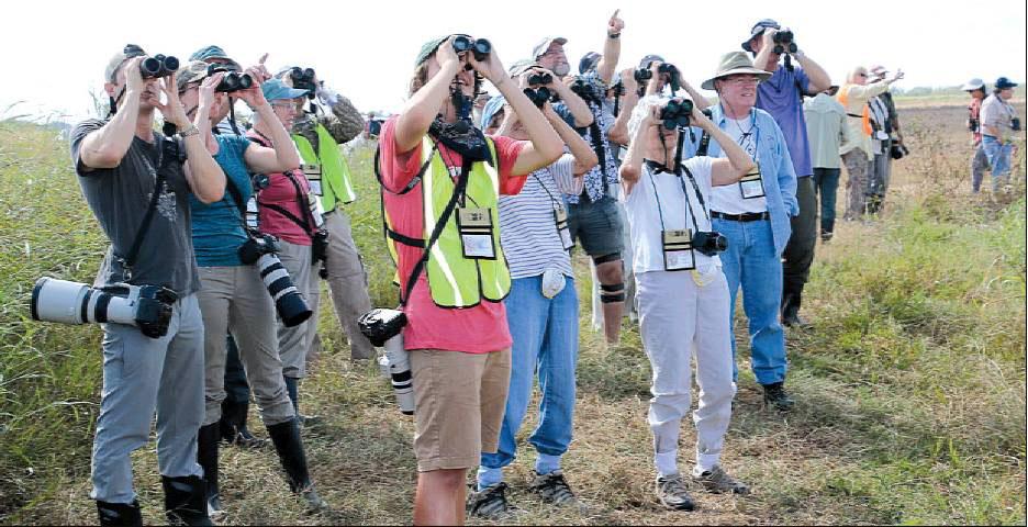 Group of birders use binoculars at 2016-YRR-Festival