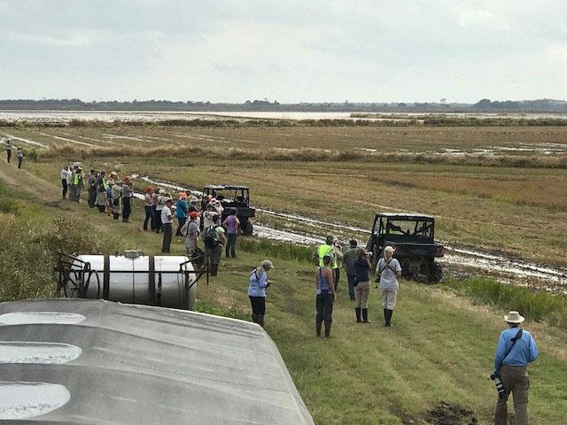 2017-Yellow-Rails & Rice Festival,-Long-shot-of-birders-walking-along-rice-field