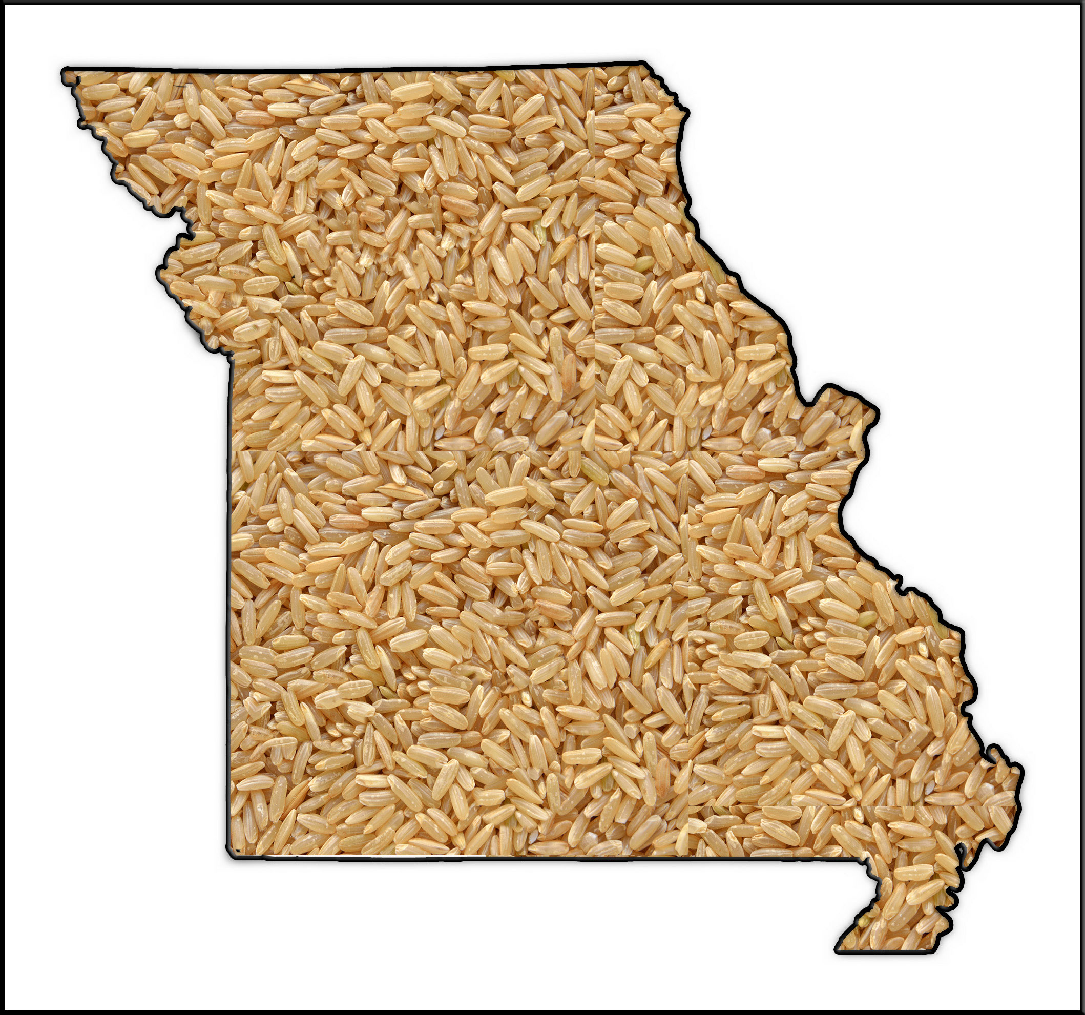 Outline of the state of MO-filled with rice