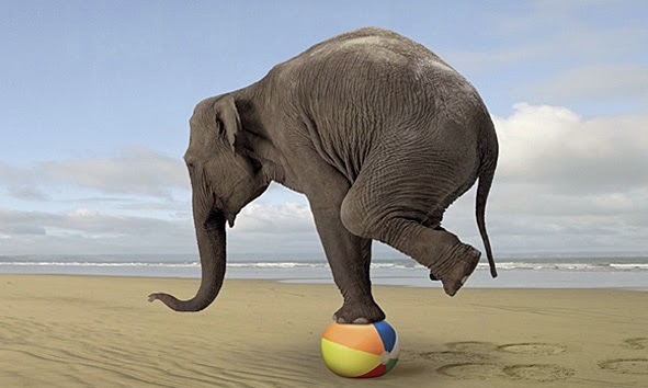 Elephant-balancing on small beach ball