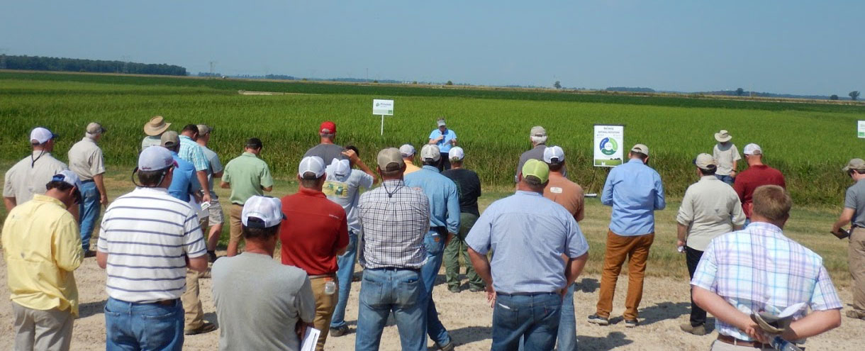 Horizon-Ag-Field-Day, people gathered outside around rice research plots
