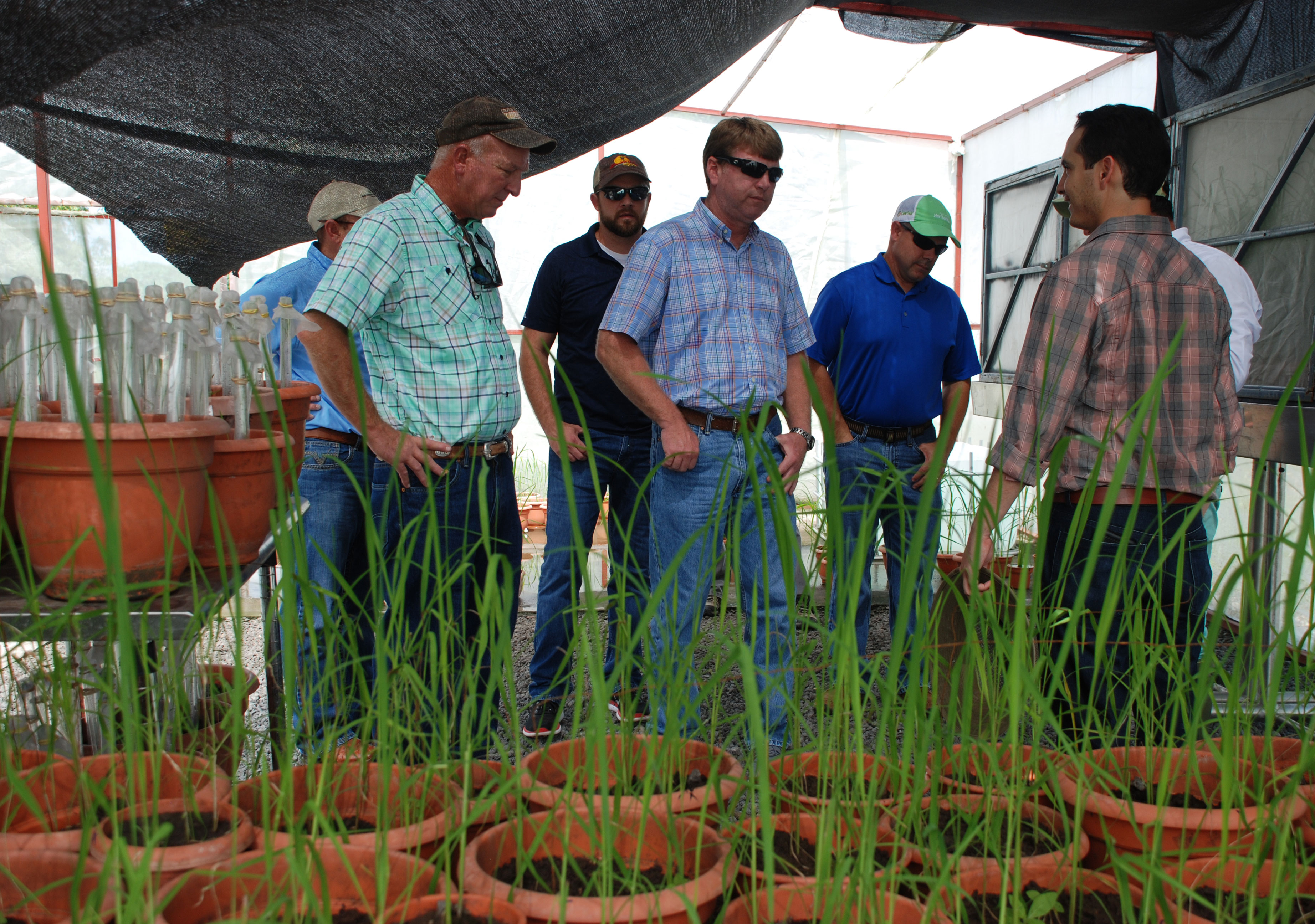 Intl-Rice-Leadership-class at research facility in Nicaragua, farmers stand near rice plants in pots